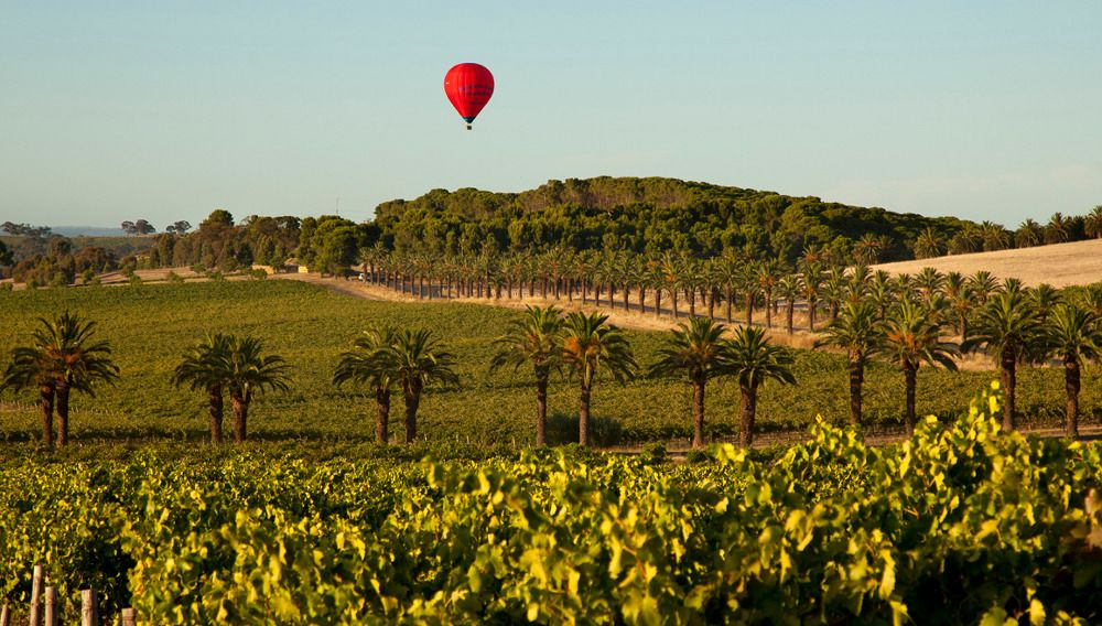 Barossa hair air balloon banner photo