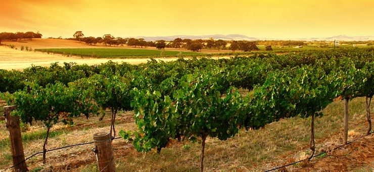 Where To Eat In The Barossa Valley