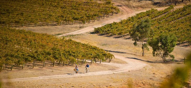 Your Ultimate Guide to Clare Valley