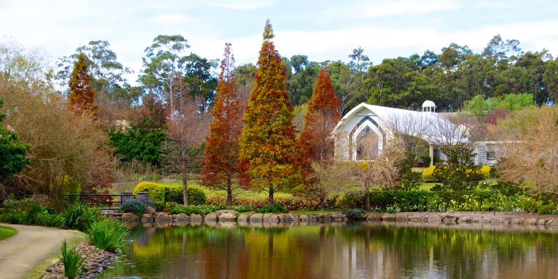 Hunter Valley botanic gardens with orange leaves
